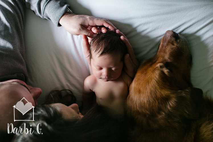 Kansas City lifestyle newborn photographer golden retriever